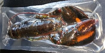 whole frozen lobster