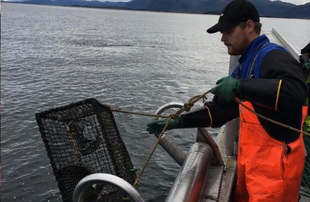 fishermen catching Wild Langoustine